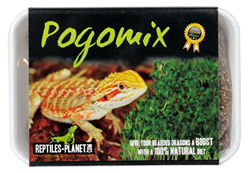 Reptiles Planet Sprout Seeds for Pogona Complete Kit