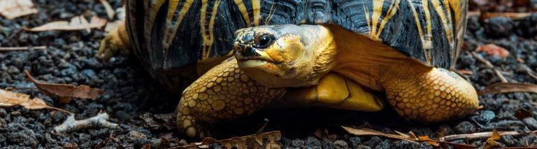 guia manual cuidados tortuga tierra en terrario