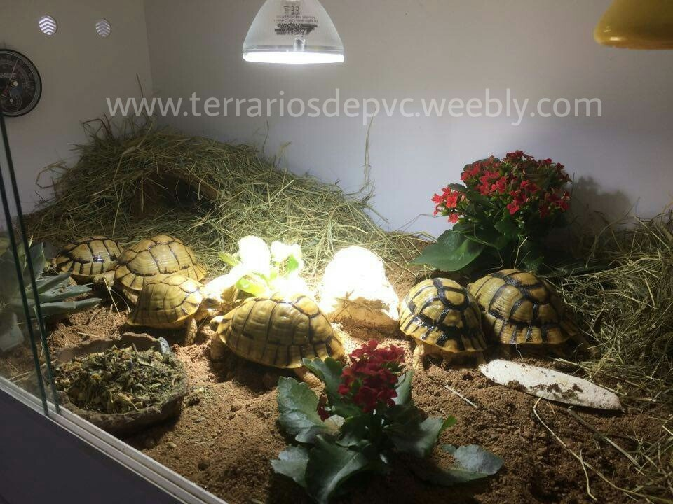 terrario para tortugas decorado completo testudo kleinmanni
